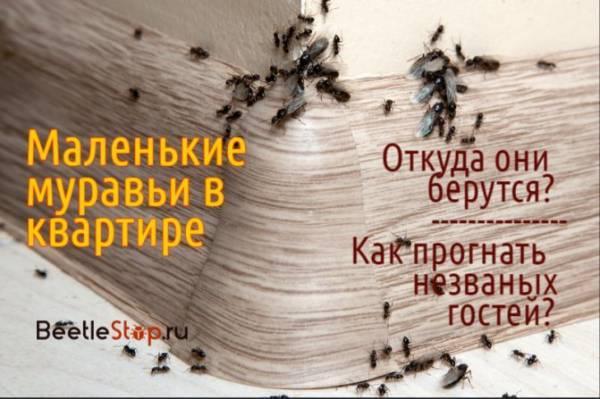 9bc65f09998984db976d0c3688ad3851
