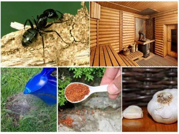 Почему муравьям нравится селиться в бане, и как от них избавиться