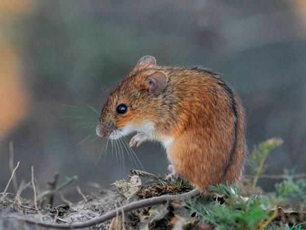 Самая необычная зимовка: зачем летучих мышей укладывают спать в холодильник