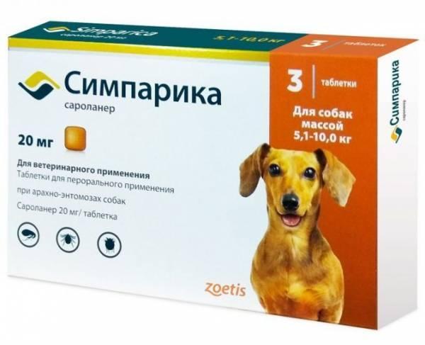 Действия при развитии аллергии у собак на укусы блох