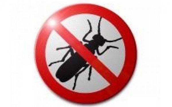 Дохлокс – и вы забудете о тараканах