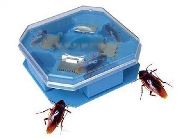 Долой тараканов: выбираем лучшее средство для уничтожения паразитов