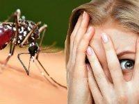 Являются ли комары переносчиками коронавируса