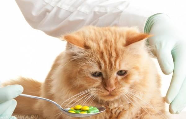 Блохи у кошек: как от них избавиться. Почему с кошки сыпятся белые крупинки: в шерсти и кале крупинки