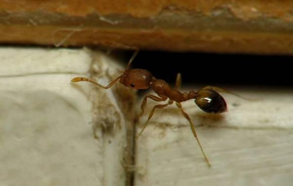Причины появления муравьев в ванной и способы избавления от них