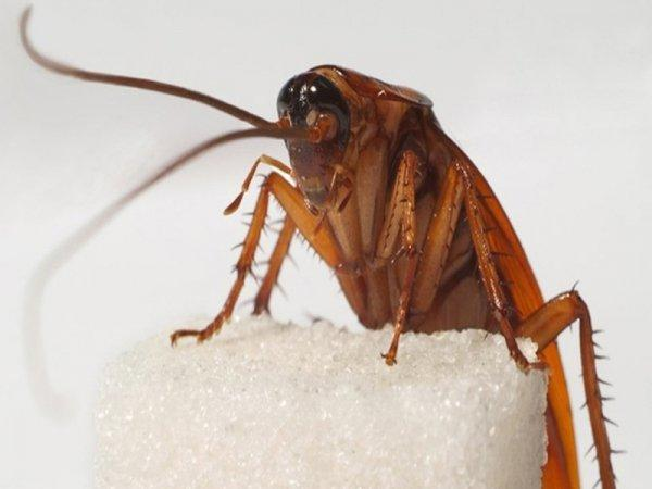 Куда делись тараканы: почему они исчезли и куда ушли?