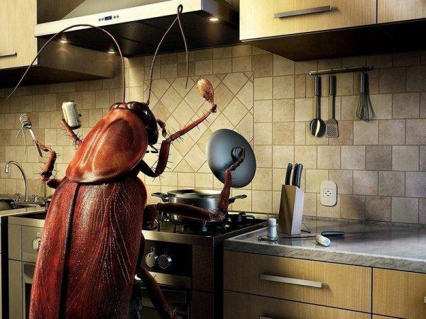 Методы борьбы с тараканами в квартире: самые эффективные, быстрые и безопасные