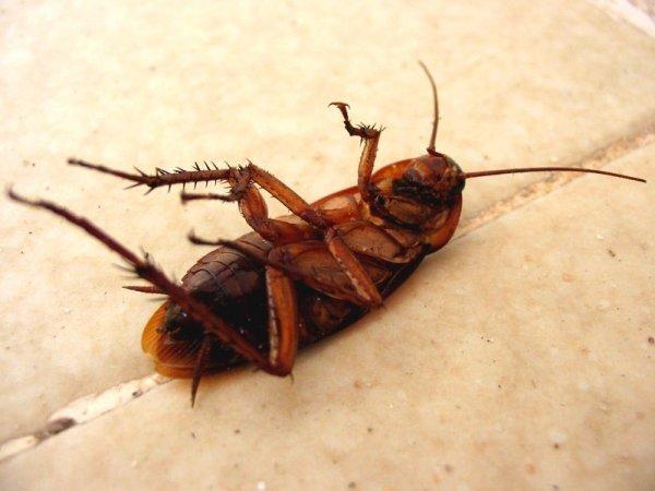 Самые эффективные способы уничтожения тараканов в квартире