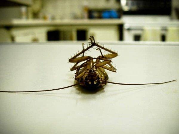 Заглянем в сонник: почему снятся тараканы?