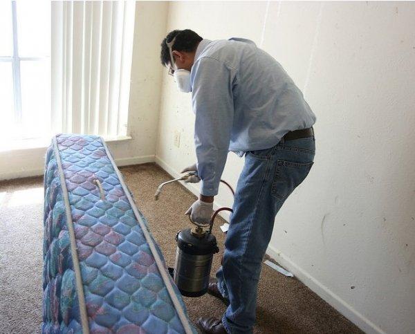 Какими средствами можно избавиться от клопов в домашних условиях