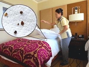 Как уничтожить клопов в квартире самостоятельно