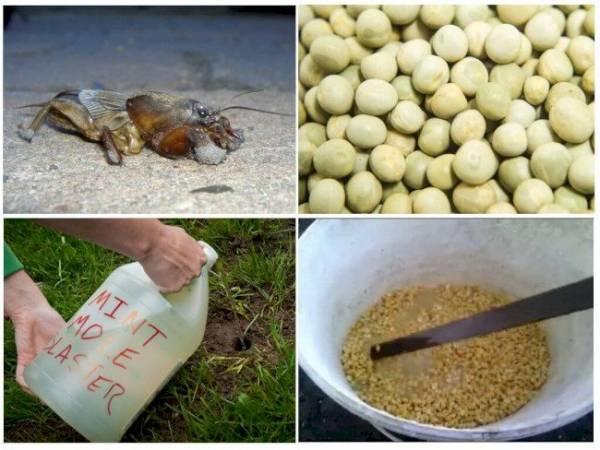 Инструкция по применению препарата Регент от колорадского жука