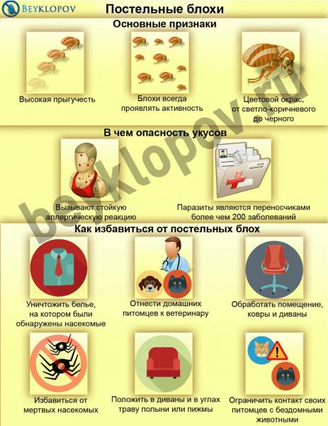 Особенности постельных блох