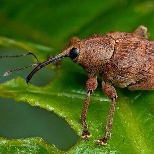 Питание и распространение популяций насекомых-вредителей
