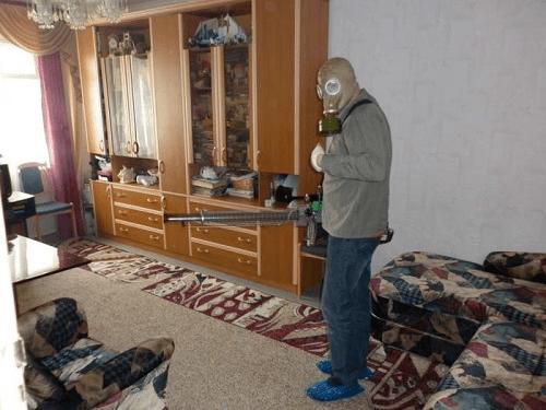 Особенности борьбы с блохами в квартире