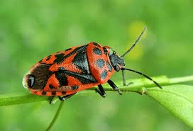 Как одержать победу над жуками-солдатиками