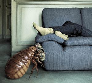 Как вывести клопов из своей квартиры