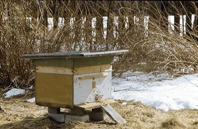 Весна в хозяйстве пчеловода: работы и заботы