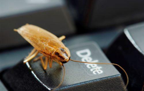 Китайская отрава от тараканов: эффективное средство