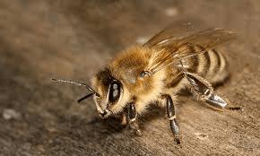 Способы избавления от пчел