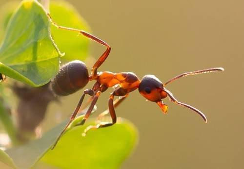 Садовые муравьи: как бороться, как избавиться, средства от муравьев в саду