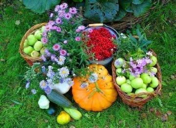 Средства от насекомых в доме – обзор лучших препаратов