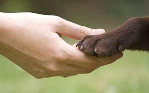 Выведение блох у собак в домашних условиях