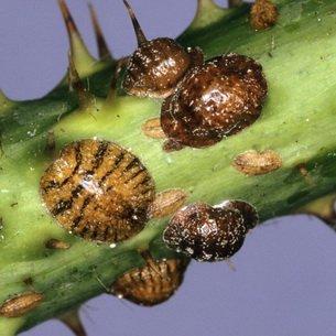 Вредители плодовых деревьев и способы борьбы с ними