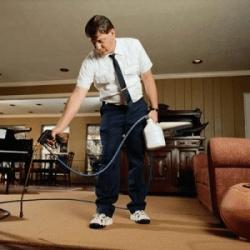 Чем обработать дом от блох