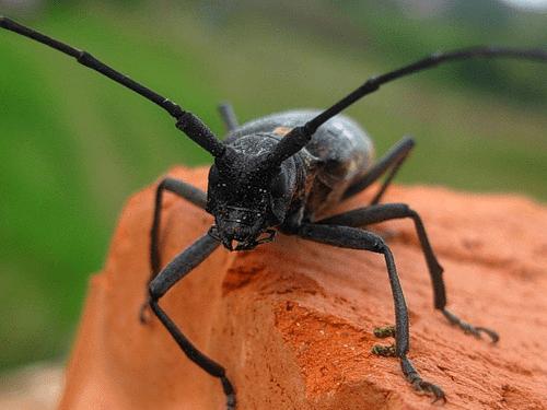 Как защитить свой сад от жука-короеда