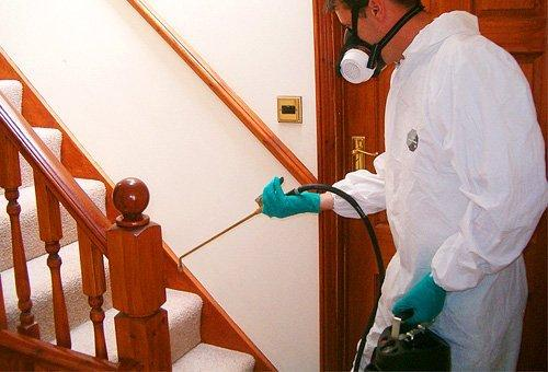 Муравьи в доме: как избавиться, как вывести, борьба и уничтожение