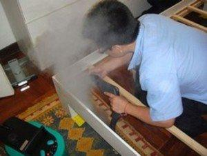 Как самостоятельно избавиться от блох в доме