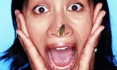 Стоит ли бояться укуса осы