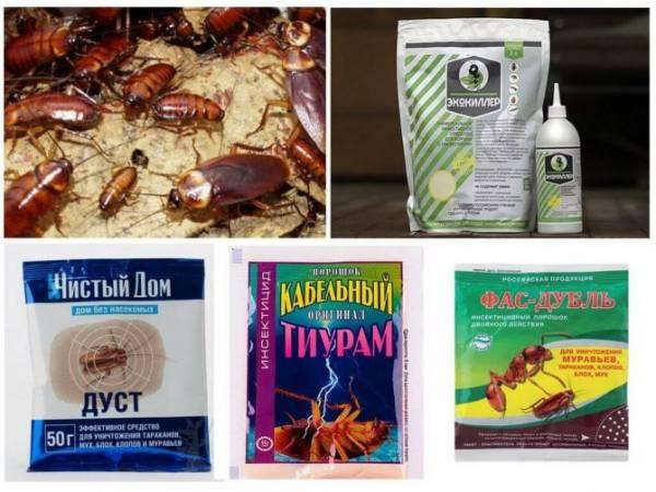 Китайская отрава от тараканов: эффективное средство из Поднебесной по низкой цене