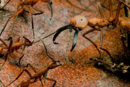 Интересные факты о муравьеде: загадка природы или ошибка эволюции