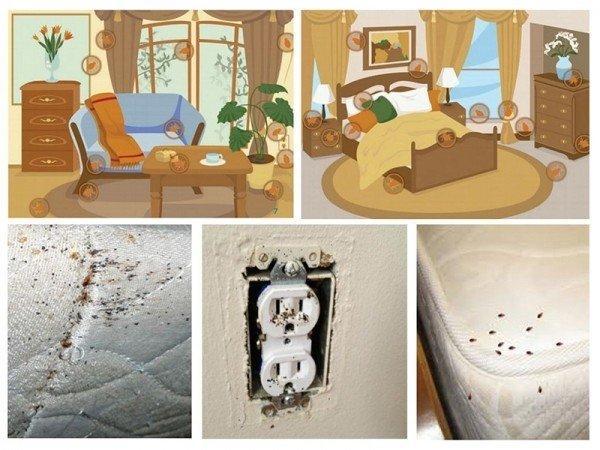 Откуда берутся клопы в квартире: причины появления и способы борьбы