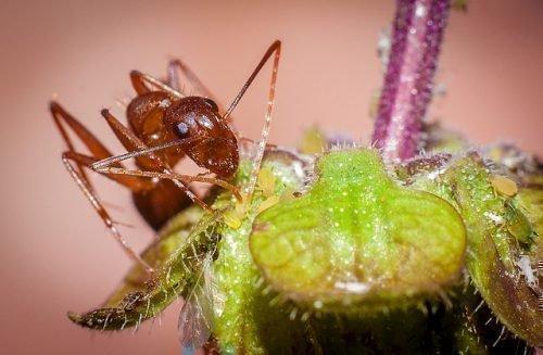 Способы избавления от муравьев в квартире рыжих