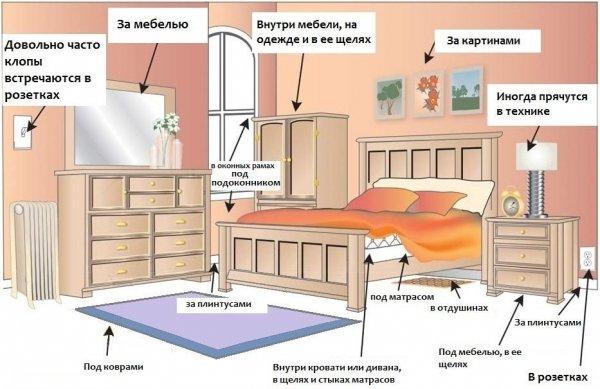 Уничтожение клопов в квартире и полезные советы от экспертов