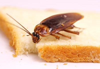 От соседей ползут тараканы что делать