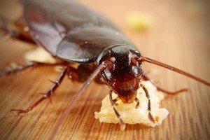 Ультразвуковой отпугиватель тараканов: отзывы и преимущества